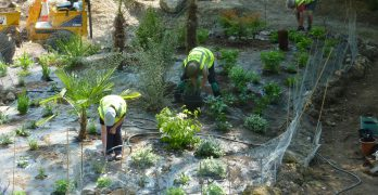 Recovering The Central Bed – May 2018